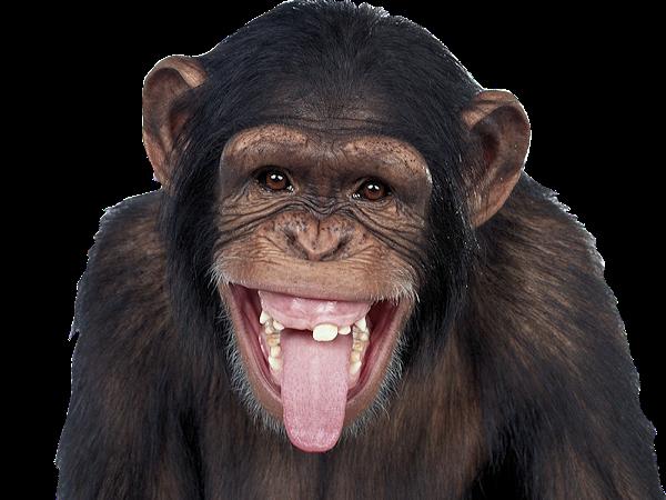 image animaux qui tire la langue