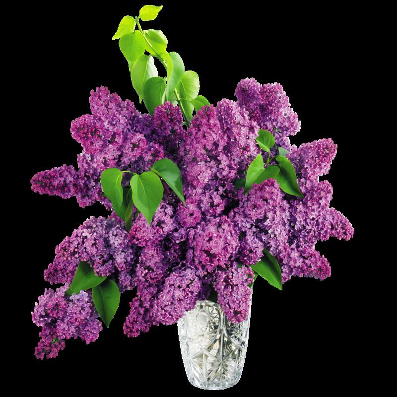 fleur-lilas.png